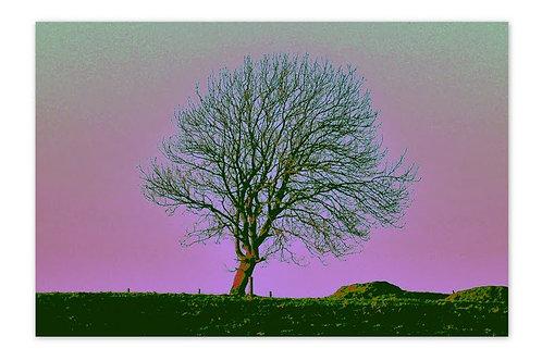 Apple Tree Purple A4 Print