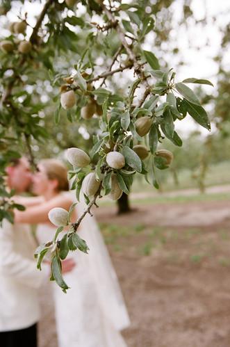 Chico Wedding Almond Orchard