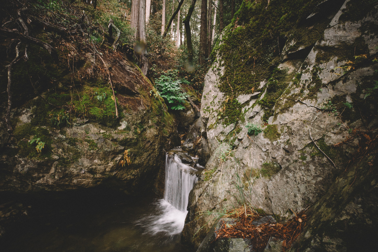 Juniper Ridge Redwood Mist Ingrid Nelson Photographer.