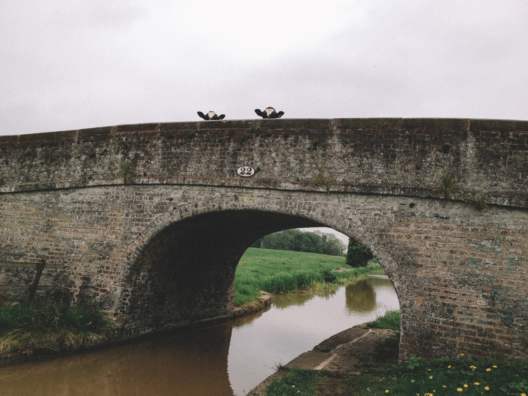 Ingrid Nelson Photography Cows on a bridge