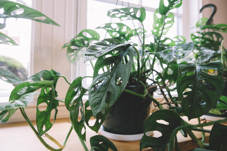 The Sunroom Plants Ingrid Nelson Photographer Nevada City