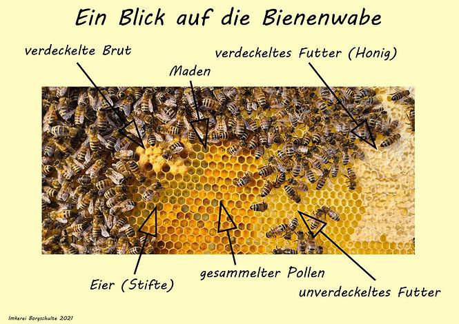 Infotafel Bienenwabe.jpg
