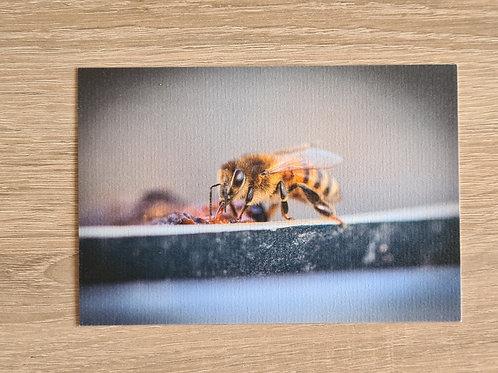 Postkarte Biene 1