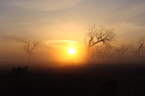 fog cows.jpg