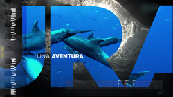 Motion graphics, animación, visuales, diseño, video mapping, videomaping