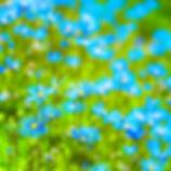 blue 12x12-1.jpg