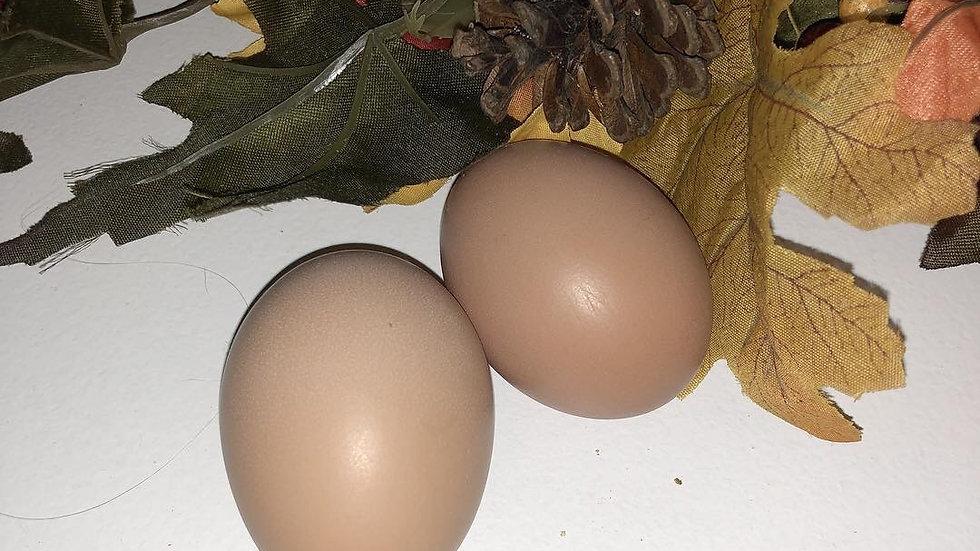 Fresh large Brown Eggs