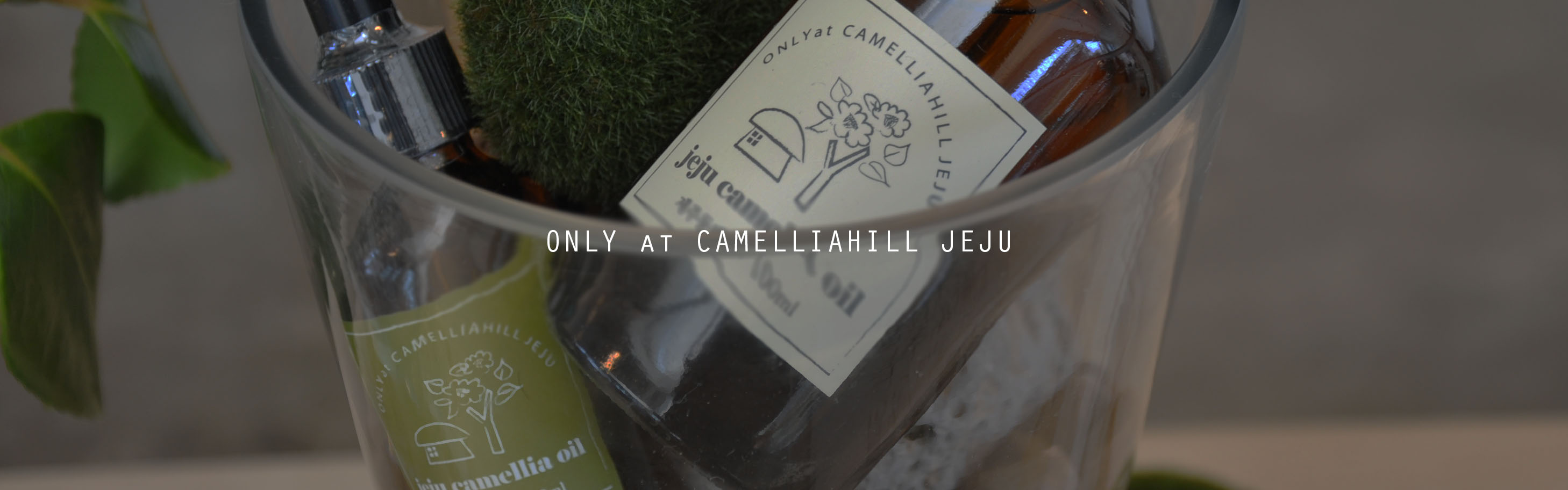 only at camelliahill jeju