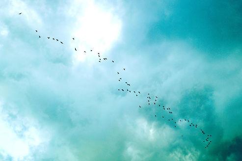 Vögel_Echtjetzt.jpg