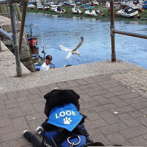 """Dog Bandana- 3 SIZES - """"LOOE"""" - Dog neckerchief - Dog neckwear - Cornwall"""