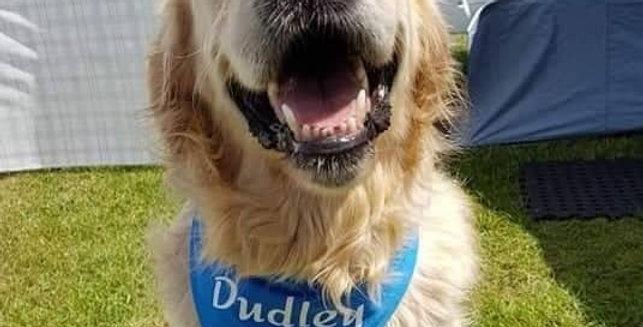 PERSONALISED Dog Bandana - 3 SIZES - 3 COLOURS - NAME of your choice