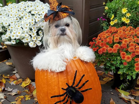Trick or Treat! Pumpkin Sorbet Recipe for your Pup!