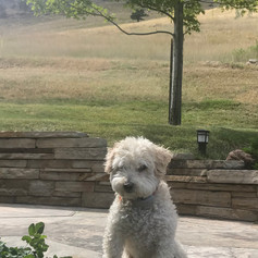 Parker sitting proud in his backyard in North Boulder