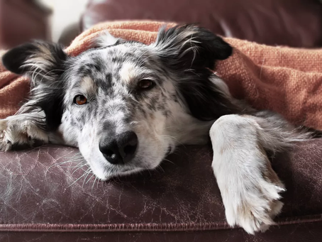 Does your dog find you boring?