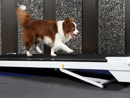 Does your dog need social distancing? Here are few indoor exercises!