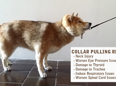 Don't pull your dog by the neck! Find the right harness instead.