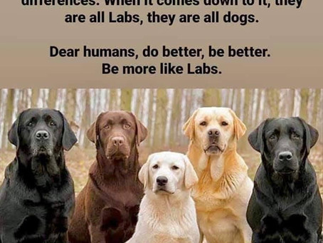 Dogs are smarter than humans!