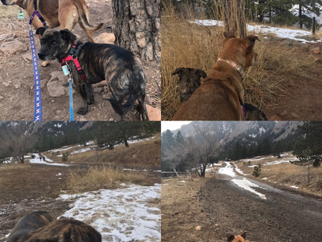 From the Sweet Walks Diary: Slipping and sliding in Chautauqua park