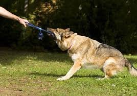 Why Dogs Need to Play: Reason #4
