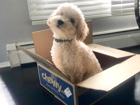 Doggy and Me Indoors:  Play the Obstacle Game