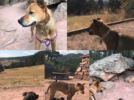 From the Sweet Walks Diary: A Bow WOW Time