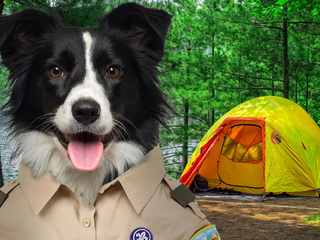 Dog Treat Recipe: Pup Scout S'mores
