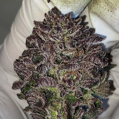 Lavender Runtz (10 REGS)