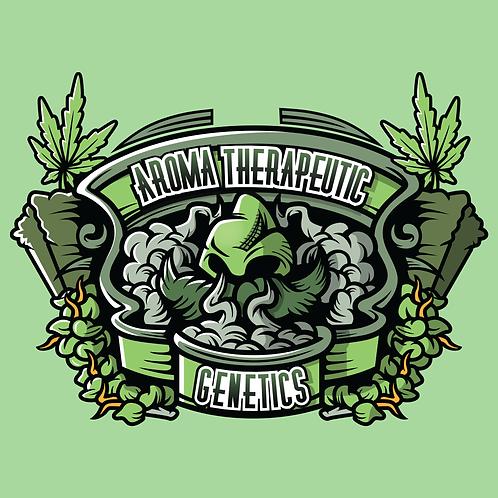 Evergreen BX x G13 x Hashplant (REG)