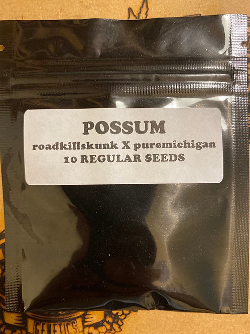 Possum (3rd Coast Genetics)