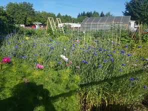 Community Garden 4