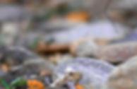 wilderness_socialmediagraphic_lent_verti