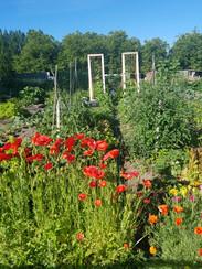 Community Garden 2