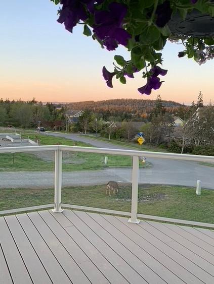 Deer off our deck
