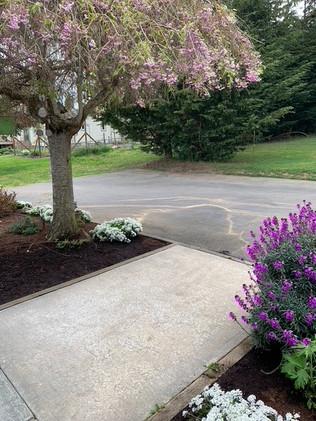 Driveway blossoms