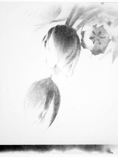 Tulpen / Eigenarchiv