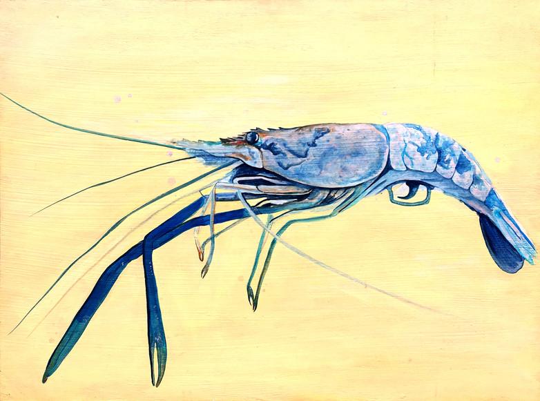 Shrimp Ray