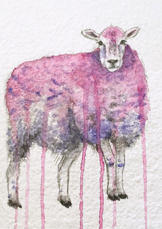Dye the Wool