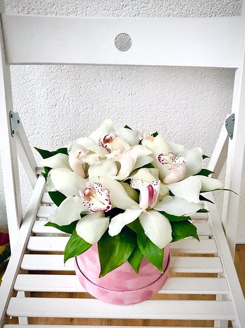 Орхидеи в бархатной шляпной коробке