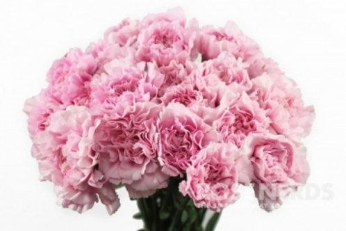 Розовый диантус 15шт