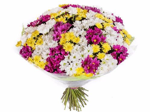 75 кустовых хризантем