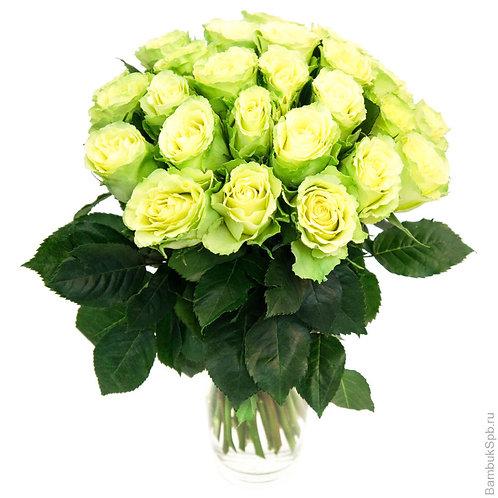 Букет из 25 зелёных роз
