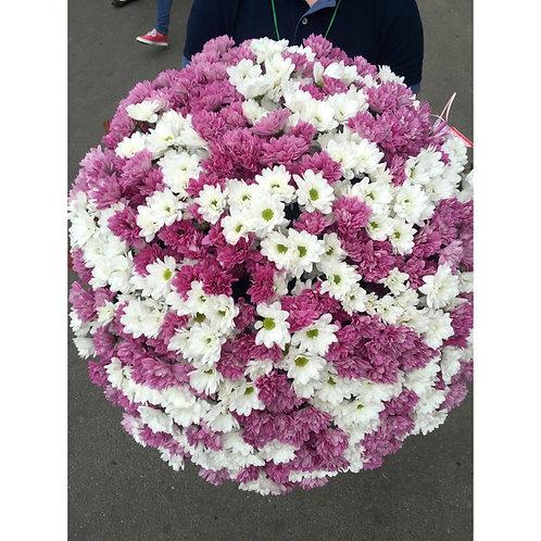 101 кустовая хризантема