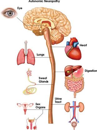 Neuropatia autonomica o disfunzione autonoma (sincope): informazioni e istruzioni (clevelandClinic)