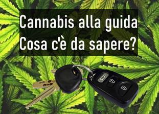 Cannabis alla guida: cosa c'è da sapere?