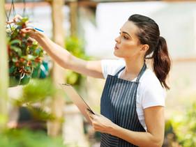 Descubre el uso de algunas plantas curativas...