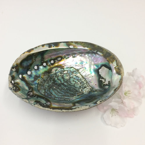 Witte salie abalone schelp white sage