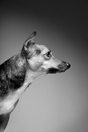 Simon Cowell's rescue dog Daisy