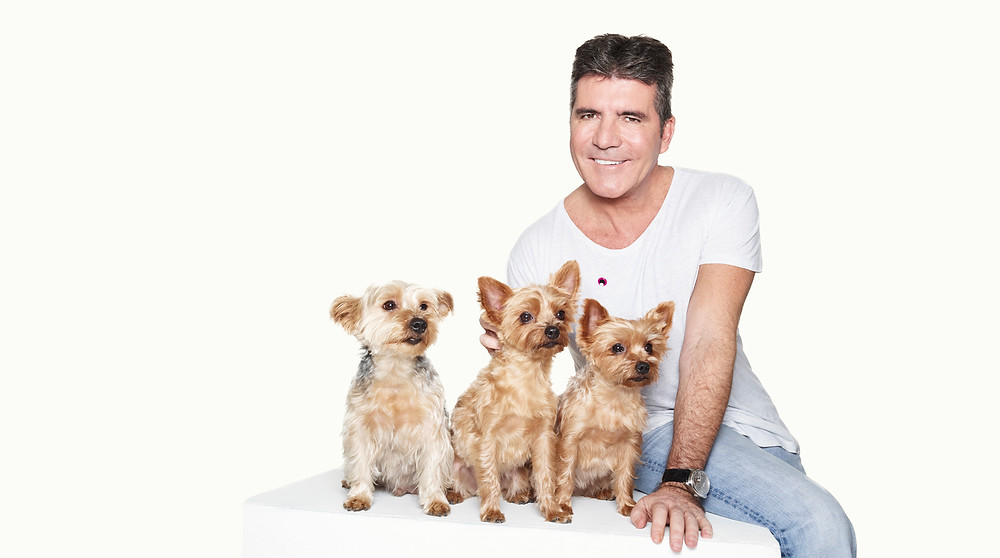 Simon Cowell with his Yorkshire Terriers Squiddly, Diddly and Freddy