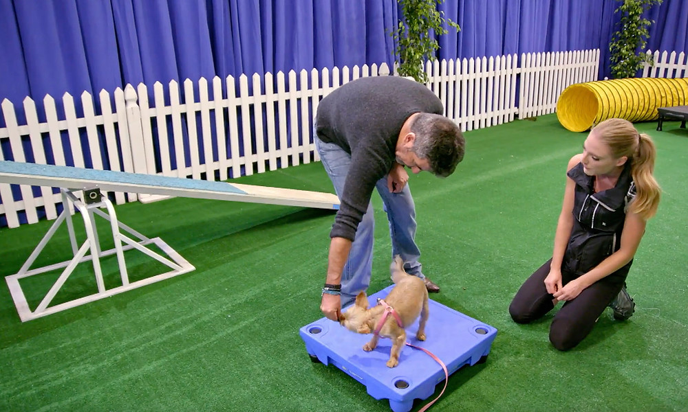 Simon Cowell training his dog Squiddly