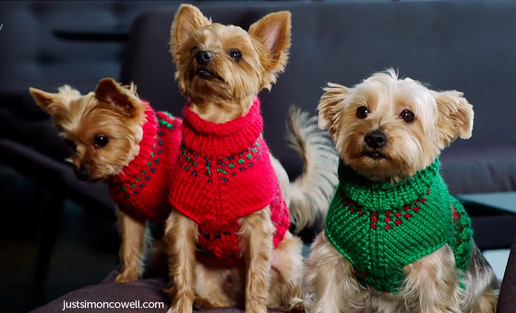 Squiddly and Diddly and Freddy in Christmas jumpers
